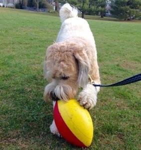 iggyfootball